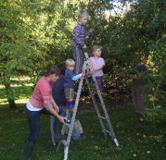 Apple picking with the Allens