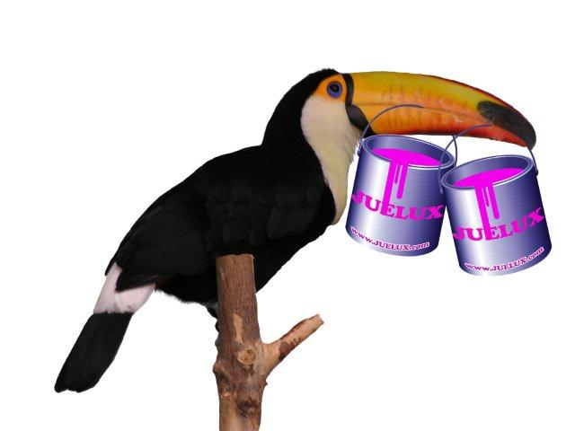 Juelux toucan with cans